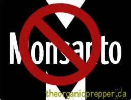 GMO vs Organic food Custom Essay - Thepenstock